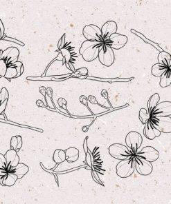 procreate cherry blossom stamps 4 download now brushes pack