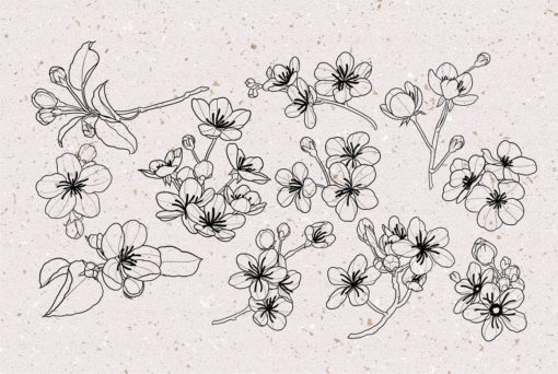 procreate cherry blossom stamps 6 download now brushes pack