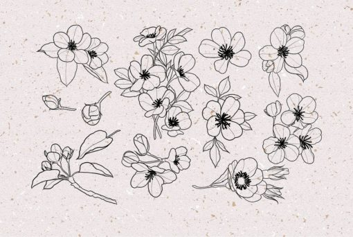 procreate cherry blossom stamps 7 download now brushes pack