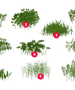 procreate foliage brushes plants 2 download now brushes pack