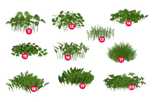 procreate foliage brushes plants 3 download now brushes pack