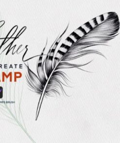 feather procreate stamp brush graphics x download now brushespack